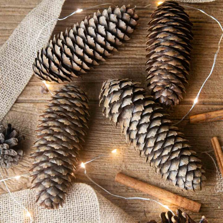 Festive diy scented pinecones on wood with cinnamon brighten up the colder months
