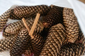 Pine cones in a bag with cinnamon sticks